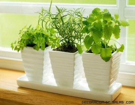 Plantas arom ticas para tu decoraci n for Plantas aromaticas de interior