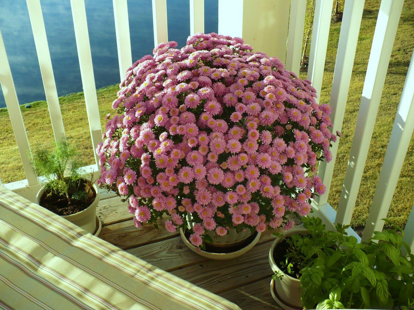 Cuidados para las plantas de exterior - Plantas para macetas exterior resistentes ...