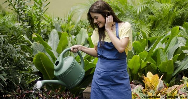 Consejos para que crezcan sanas las plantas