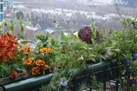 Haz tu propio jard n urbano for El jardin urbano
