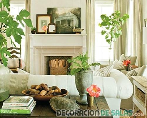 macetas con plantas para decorar