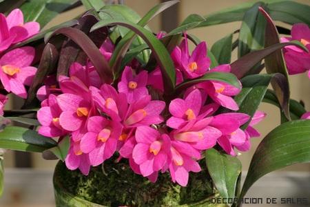 orquideas pequeñas
