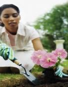 Tips de jardinería